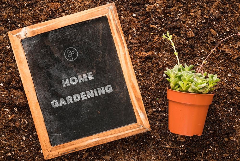 Hướng dẫn cách chọn khay nhựa trồng cây phù hợp, giá rẻ