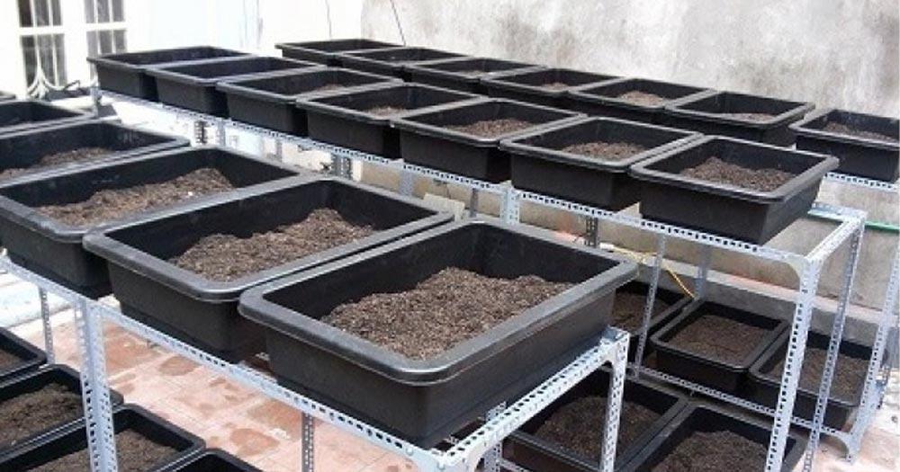 Đặc điểm của khay nhựa trồng rau