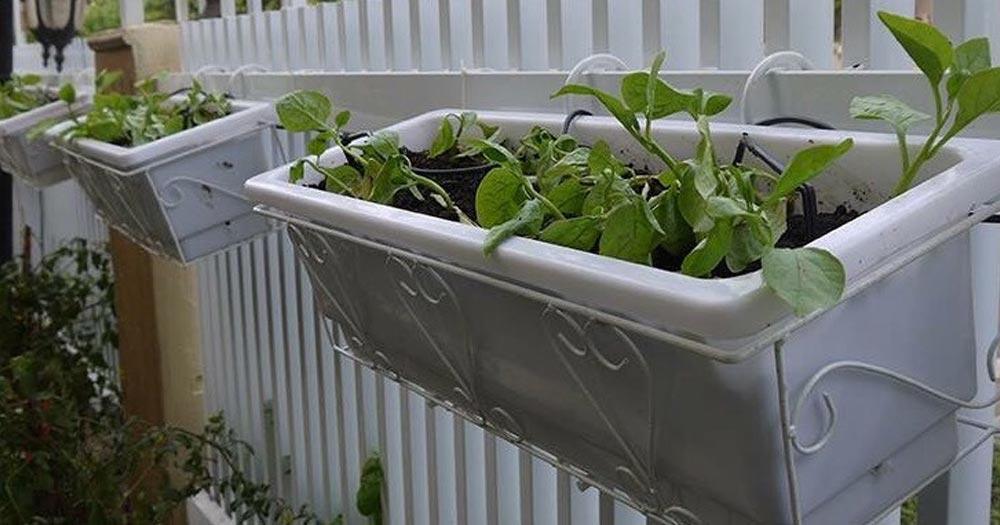 Khay trồng rau ban công