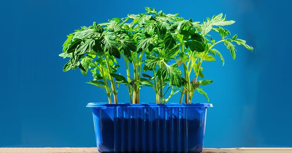 Ưu điểm nổi bật của khay trồng rau tại nhàƯu điểm nổi bật của khay trồng rau tại nhà
